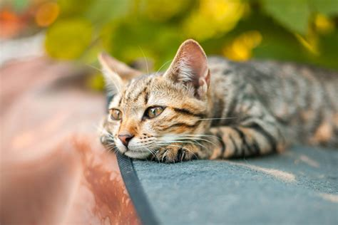 Cat outside: How to make a cat come home again | Tractive