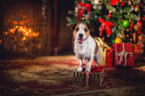 Best Christmas presents for dogs | Tractive