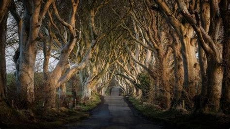 Game of Thrones: Traffic banned from Dark Hedges road